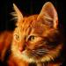 Talking Lovely Cat v2.09 [MOD]