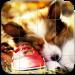 Dogs Tile Puzzle v0.9.0 [MOD]