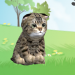 Kitten to Tap! v1.0.25 [MOD]